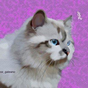 Cat_ILLU_330310.jpg
