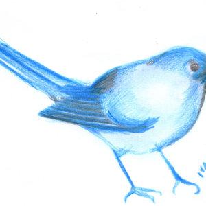 bird015_330468.jpg