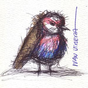 bird12_330453.jpg