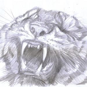 tiger08_330592.jpg