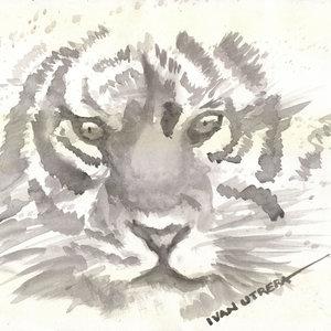 tiger05_330932.jpg