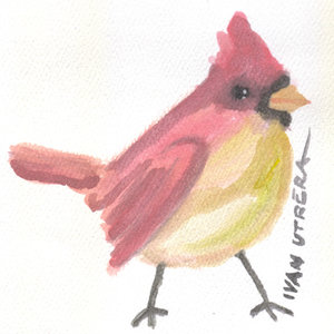 cardenal_331360.jpg