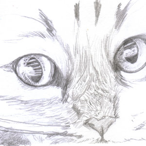 cat_331380.jpg