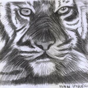 tiger02_331340.jpg