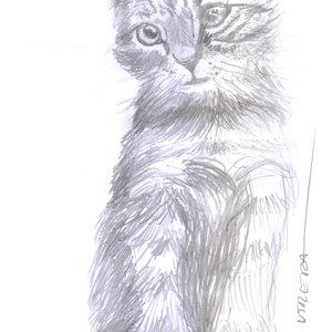 cat01_331434.jpg