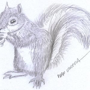 squirrel01_331586.jpg