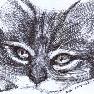 cat05_331687.jpg