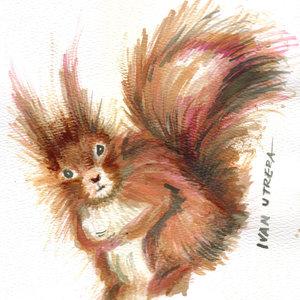 squirrel_331674.jpg