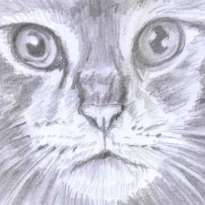 cat06_331923.jpg