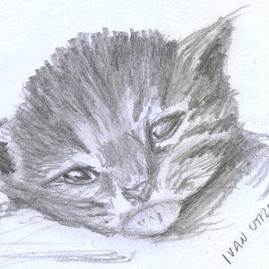 cat07_331958.jpg