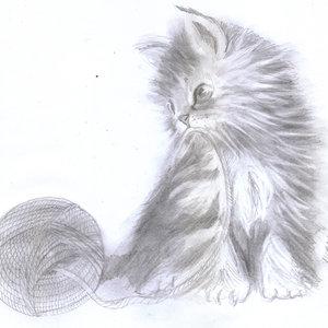 cat08_332018.jpg