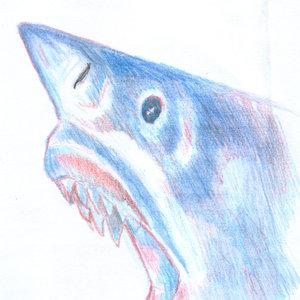 shark_332065.jpg