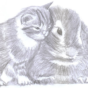 cat10_332121.jpg