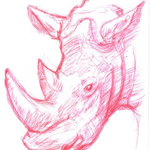 rinoceronte_332193.jpg