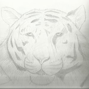 Tigre_333962.jpg