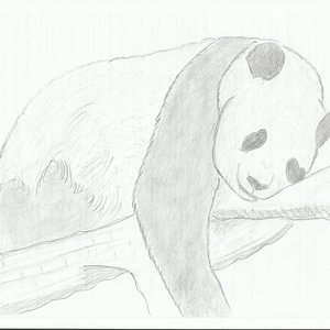 Panda_334540.jpg