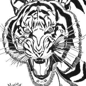 tigre_feroz_334560.jpg