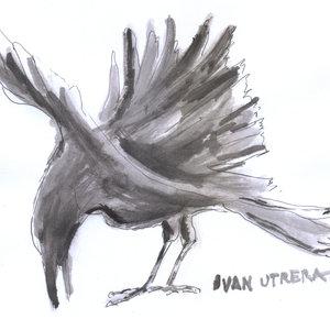 crow01_335104.jpg