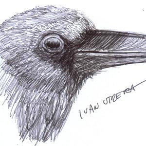 crow02_335108.jpg