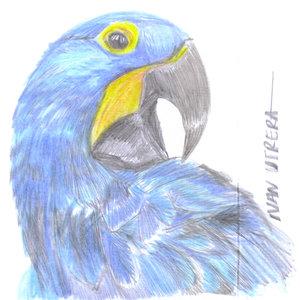 parrot04_335105.jpg