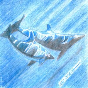 delfin_335591.jpg