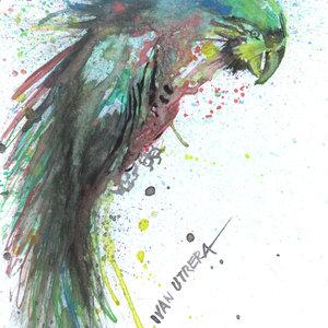 parrot02_335715.jpg