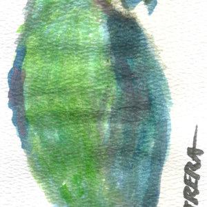 parrot01_335871.jpg
