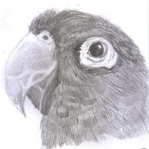 parrot_335974.jpg