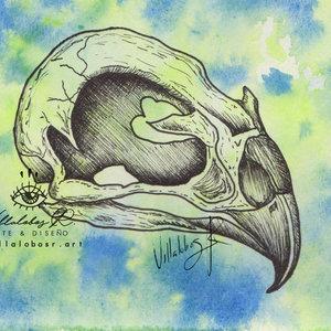 Anatomía cráneo ave