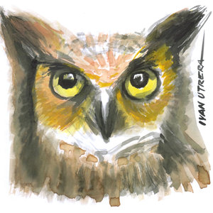 owl05_337042.jpg