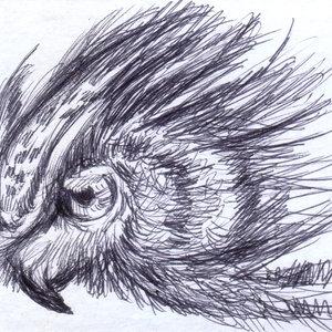 owl07_337018.jpg