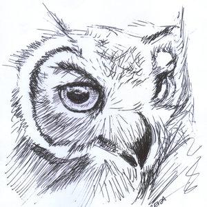 owl02_337702.jpg