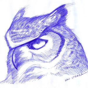 owl03_337695.jpg