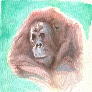 orangutan_338226.jpg