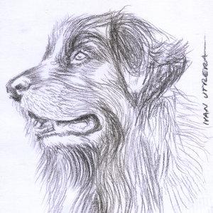 dog21_338548.jpg