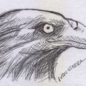 eagle03_339231.jpg