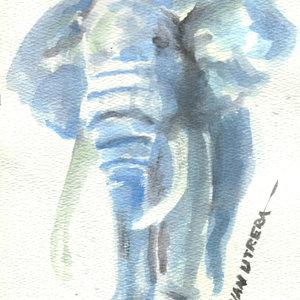 elephant01_339401.jpg
