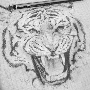 Tiger_001