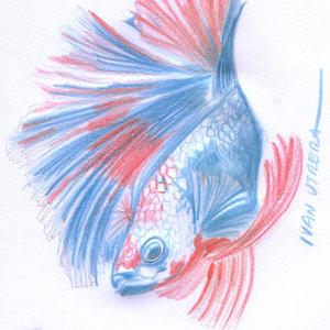 fish_339580.jpg