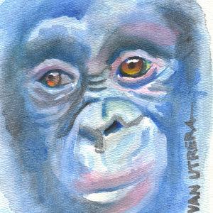 monkey02_339722.jpg
