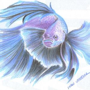 fish06_339869.jpg
