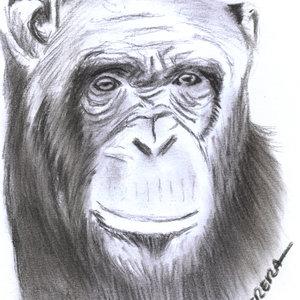 monkey01_339868.jpg
