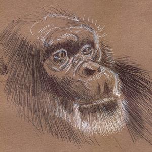 monkey_340000.jpg