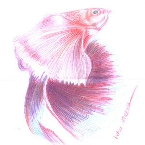 fish09_340066.jpg