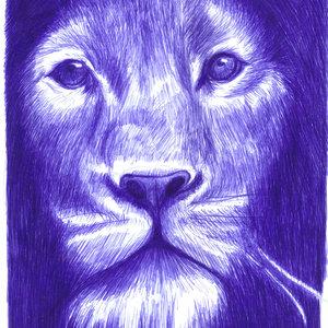 lion10_340067.jpg