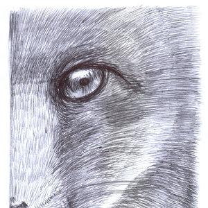 fox05_340379.jpg