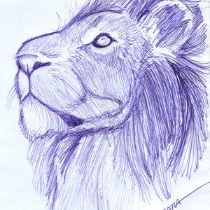 lion07_340363.jpg