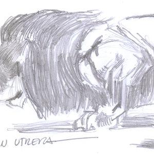 lion06_340438.jpg