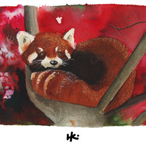 Red Panda watercolor
