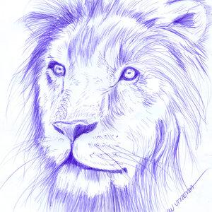 lion04_340550.jpg